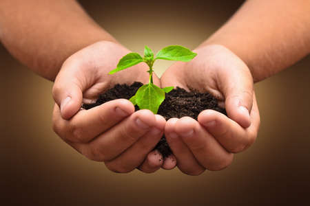 hand holding plant: Green plant in a child hands on dark background Stock Photo