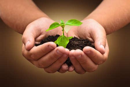 crecimiento planta: Planta verde en un niño las manos sobre fondo oscuro