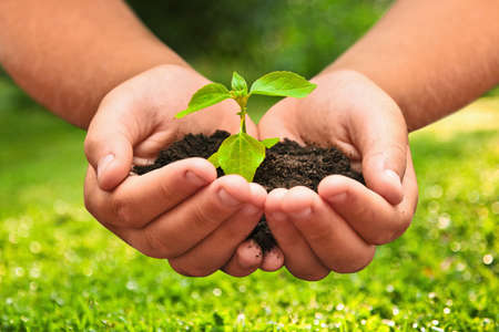 Green plant in a child hands on natural background