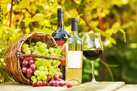 grape: Red and white grapes in a basket and bottles of wine on background grape leaves Stock Photo