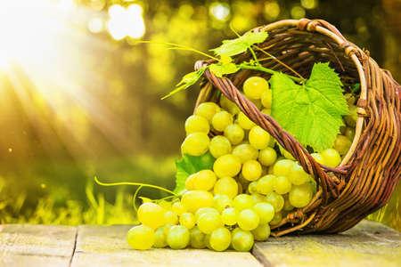 canastas de frutas: Uvas maduras en cesta de mimbre en el fondo soleado