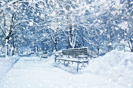 covered in snow: Snow covered trees and benches in city park