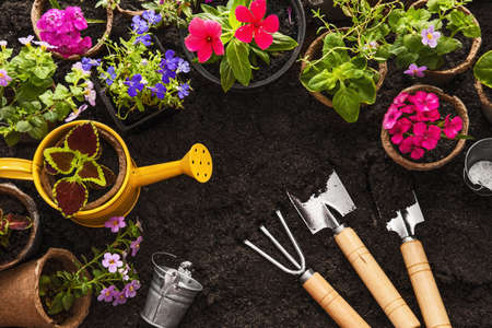 Gardening tools, watering can, seeds, flowers and soil Garden background Foto de archivo