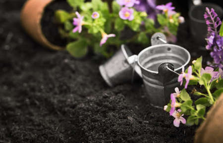 Gardening tools, watering can, seeds, flowers and soil. Garden concept background