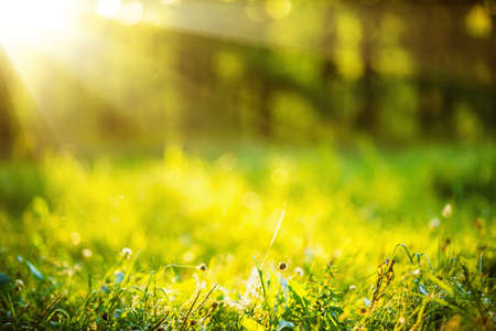 Fondo natural con hierba verde y el sol efecto bokeh