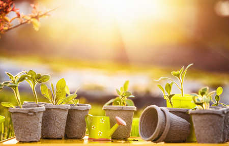 seeding: Young plants in sunlight, Growing plants, Plant seedling Stock Photo