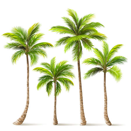 Palm Trees Set. Vector Çizim
