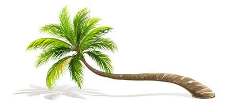 Palme isoliert. Vektor Illustration