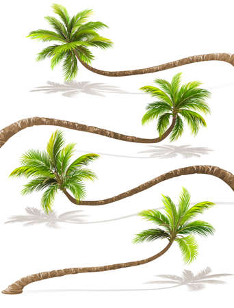Palm trees with shadow. Vector Illustration