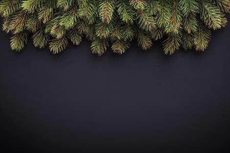 Fir branches on dark background