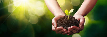 Plant in Hands. Ecology Concept
