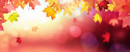 Falling Autumn Maple Leaves Natural Colorful Background Standard-Bild - 107306514