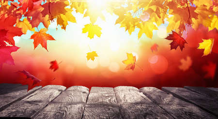 Autumn Colorful Background With Leaves And a Wooden Table In Sunlight Standard-Bild - 107530748