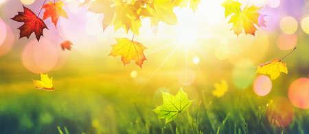 Falling Autumn Maple Leaves Natural Colorful Background. Fall Season Standard-Bild - 107941720