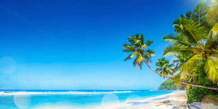 Palm Beach In Tropical Paradise. Summer Travel Seychelles Islands