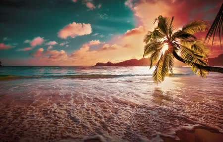 Tropical Palm Tree in the Sunshine. Paradise Island in the Ocean