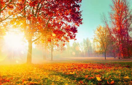 가을 풍경. 가을 장면. 나무와 나뭇잎, 햇빛에 안개가 자욱한 숲 스톡 콘텐츠