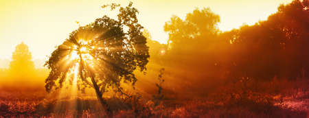 Magical Tree With Sun Rays In The Morning. Colorful Landscape With Foggy Forest, Gold Sunlight. Enchanted Tree. Summer Sunny