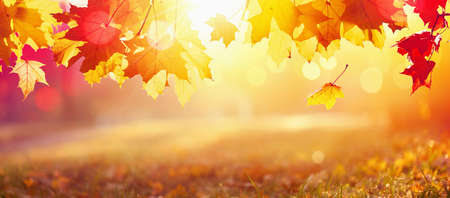 Falling Autumn Maple Leaves Natural Colorful Background Stockfoto