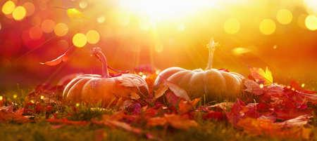 Holiday Autumn Festival Concept. Fall Scene. AutumnThanksgiving Day Background. Halloween Pumpkins. Orange Pumpkin Over Beauty Bright Autumnal Nature Background. Harvest Stockfoto