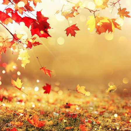 Falling Autumn Maple Leaves Natural Gold Background
