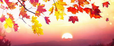 Falling Autumn Maple Leaves Natural Sunset Background