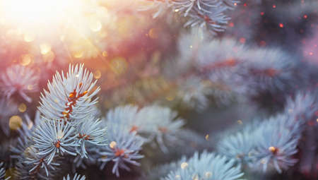 Spruce Branches With Glitter. Christmas Background Stockfoto