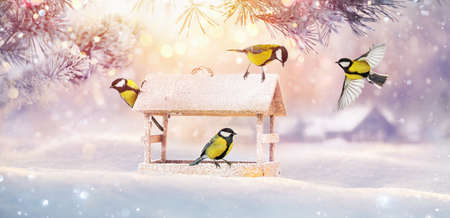 Christmas Card with Birds and Bird Feeder. Winter Sunny Landscape