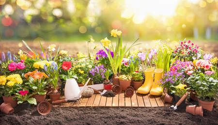 Garden Flowers, Plants and Tools on a Sunny Background. Spring Gardening Works Concept Standard-Bild