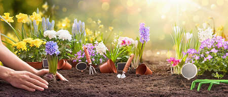 Garden Flowers, Plants and Tools on a Sunny Background. Spring Gardening Works Concept 版權商用圖片