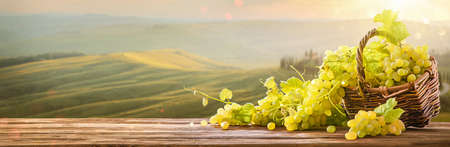 Ripe Grapes in Wicker Basket on Sunny Valley. Harvesting Standard-Bild