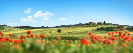 Beautiful Landscape with Poppies Flowers. Chianti Tuscany Italy