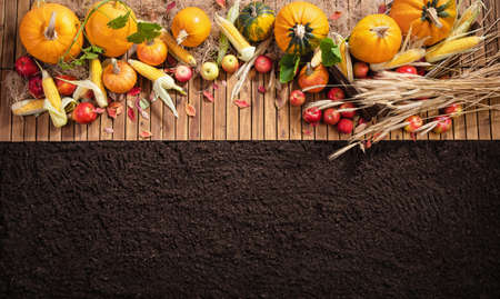 Harvested Autumn Harvest on a Wooden Background. Top View Standard-Bild