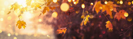 Autumn Landscape. Fall Scene. Trees and Leaves in Sunlight Rays. Bokeh effect