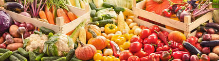 Harvest, Food Background. Autumn Collection of Fresh Organic Vegetables