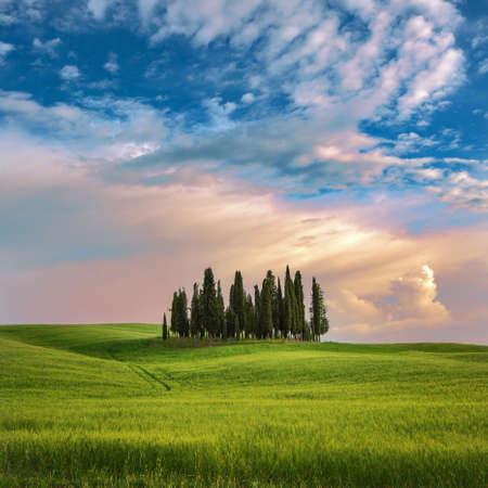 Beautiful Italian Landscape with Cypresses. Tuscany Italy