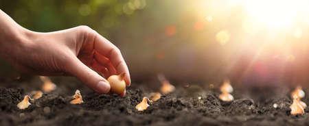 Farmer planting seeds into fertile soil, closeup. Spring sunny day