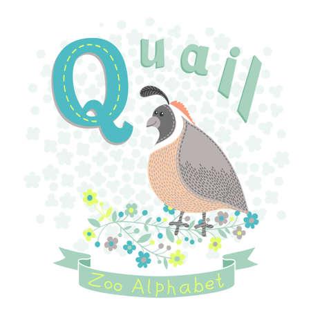 Vector animals: Thư Q - Quail. Bảng chữ cái với những con vật dễ thương. Vector hình minh họa. Hình minh hoạ
