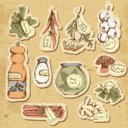 black pepper: Set of spices and herbs. Vector Illustration.