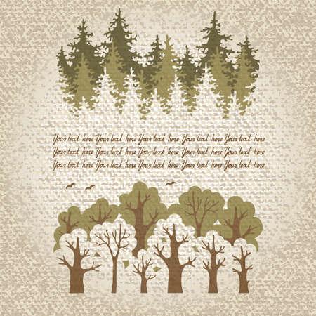 cedro: Ilustración de verde bosque de coníferas y de hoja caduca