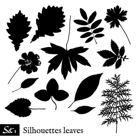leafage: Set of Leaf Silhouettes. Isolated on white. Vector collection.