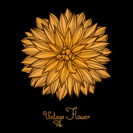 flor aislada: Brillante de la dalia aislada para el dise�o. Ilustraci�n del vector.