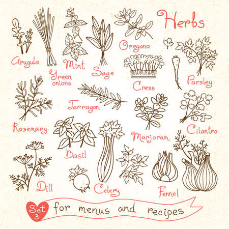 herb garden: Set drawings of herbs for design menus, recipes and packages product. Vector Illustration.