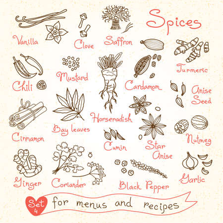 especias: Establecer dibujos de especias para los menús de diseño, recetas y paquetes de productos. Ilustración del vector.