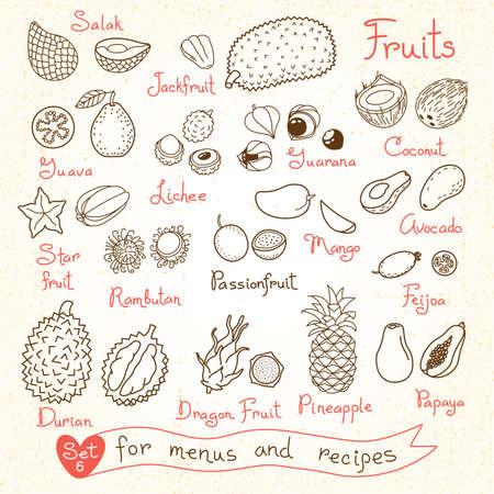 デザイン メニューのレシピ、パッケージ商品のためのフルーツの図面を設定します。ベクトルの図。
