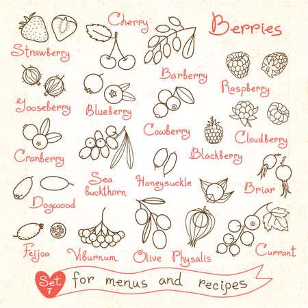 Establecer dibujos de bayas para los menús de diseño, recetas y paquetes de productos. Ilustración del vector. Foto de archivo - 41486022