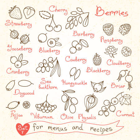 Set drawings of berries for design menus, recipes and packages product. Vector Illustration.