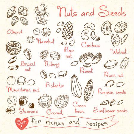 Establecer dibujos de nueces y semillas para los menús de diseño, recetas y paquetes de productos. Ilustración del vector.