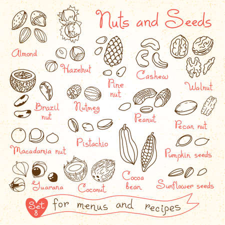 kinds: Set drawings of nuts and seeds for design menus, recipes and packages product. Vector Illustration.
