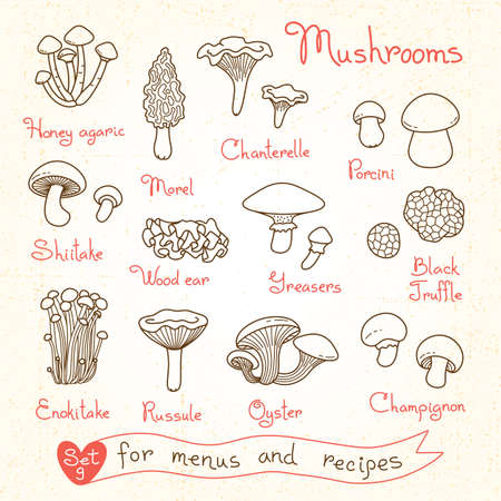 Set drawings of mushrooms for design menus, recipes and packages product. Vector Illustration. Vettoriali